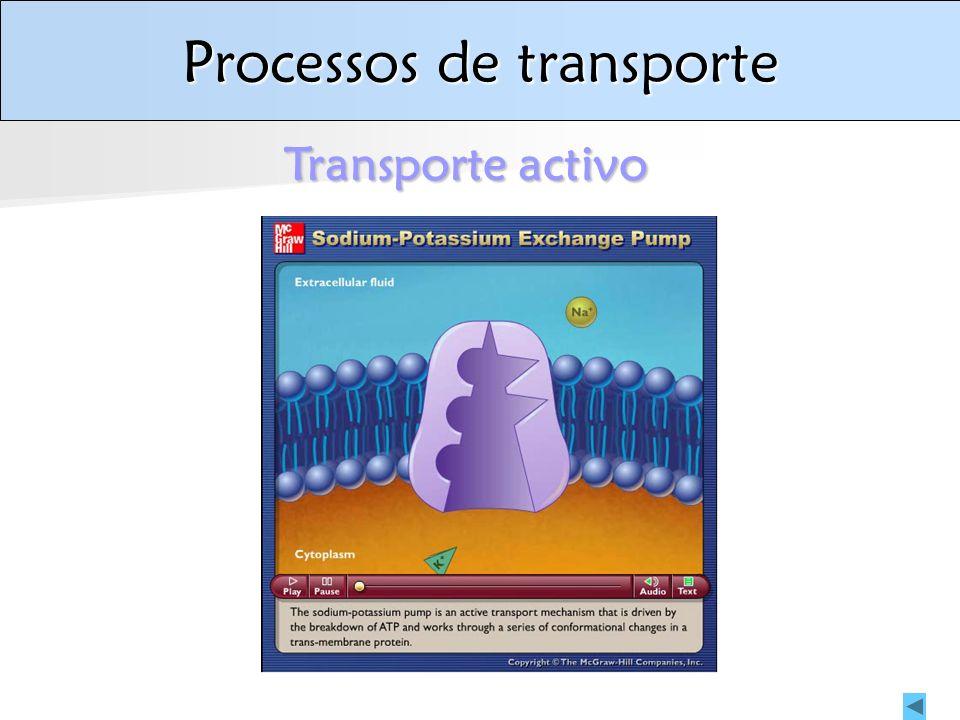Processos de transporte Transporte activo