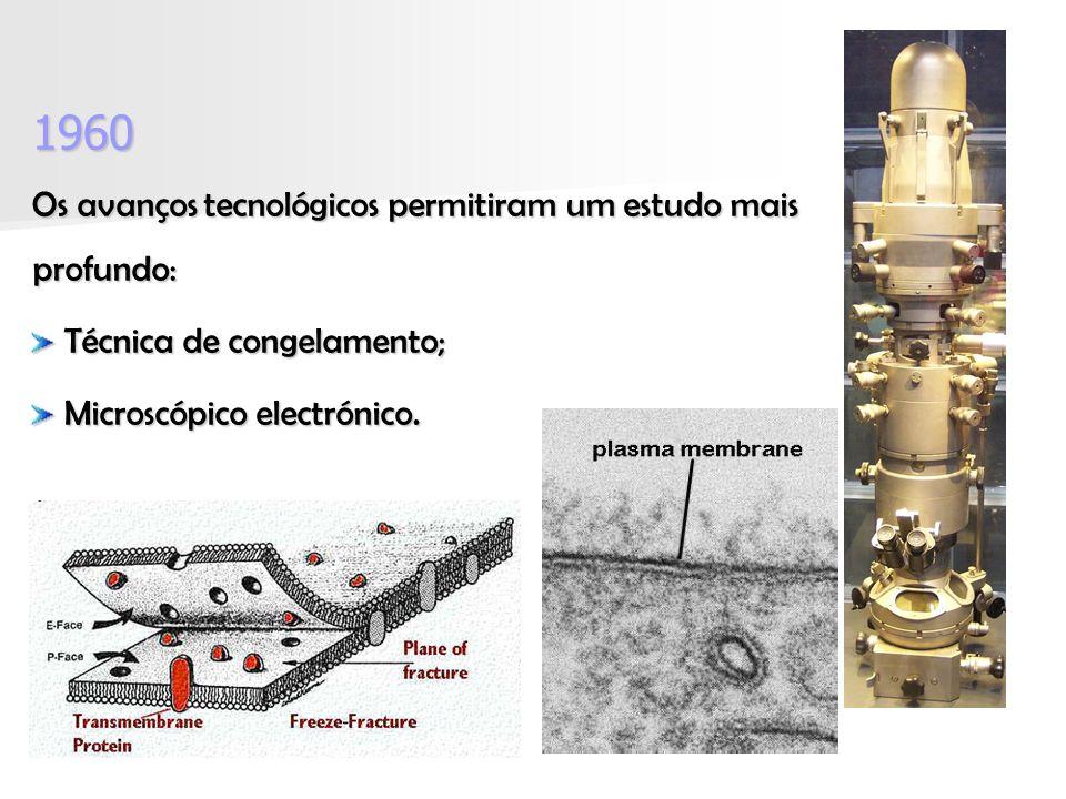 1960 Os avanços tecnológicos permitiram um estudo mais profundo: Técnica de congelamento; Técnica de congelamento; Microscópico electrónico.