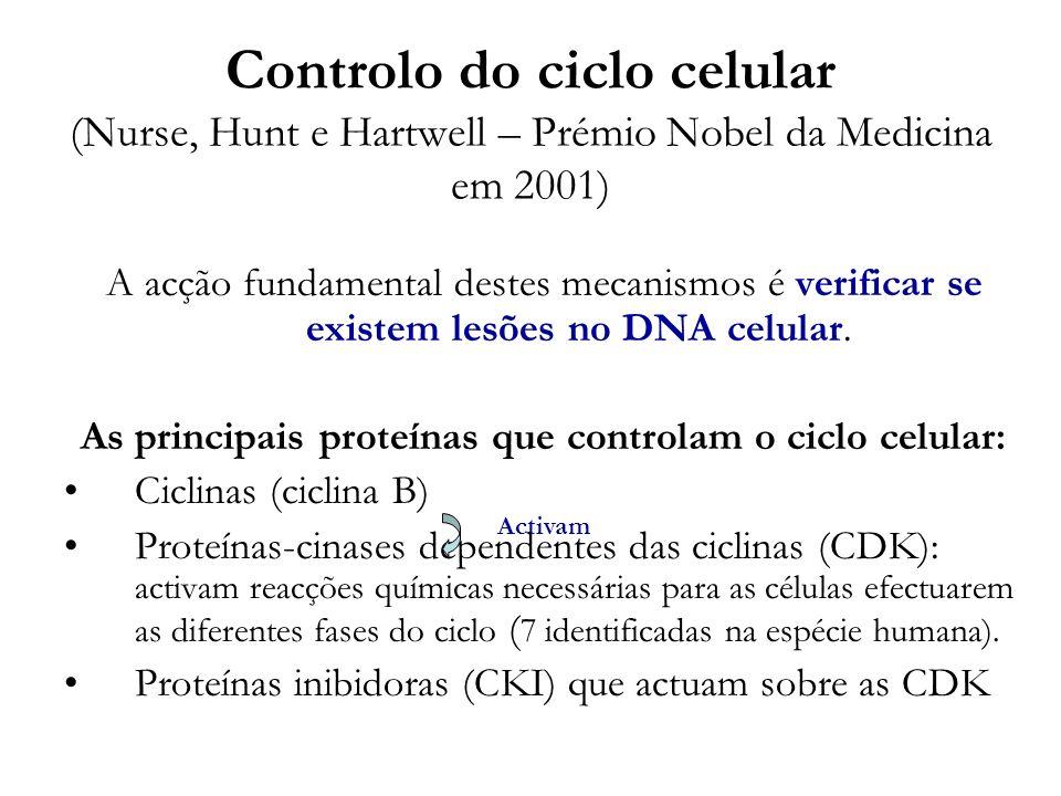Controlo do ciclo celular (Nurse, Hunt e Hartwell – Prémio Nobel da Medicina em 2001) A acção fundamental destes mecanismos é verificar se existem les