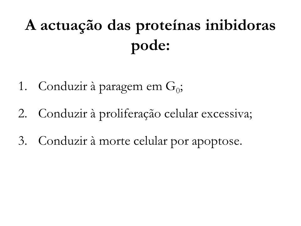 A actuação das proteínas inibidoras pode: 1.Conduzir à paragem em G 0 ; 2.Conduzir à proliferação celular excessiva; 3.Conduzir à morte celular por ap