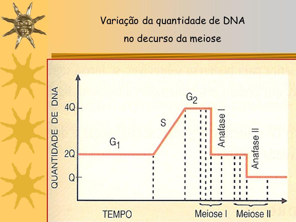 Início Meiose: 1 cromossoma = 2 moléculas de DNA idênticas, de dupla hélice (2 cromatídios-irmãos), unidos pelo centrómero: 46 cromossomas 4C – 2n Fin