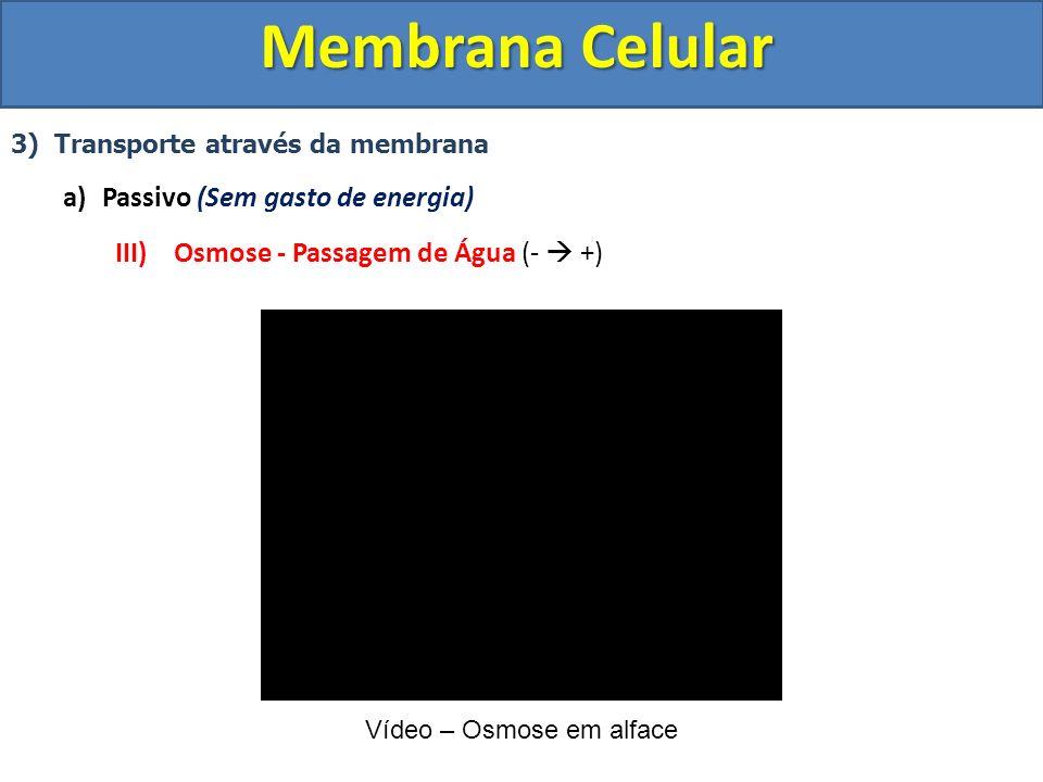 Membrana Celular 3) Transporte através da membrana a)Passivo (Sem gasto de energia) III) Osmose - Passagem de Água (- +) Vídeo – Osmose em alface