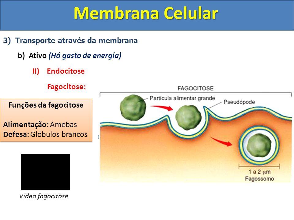Membrana Celular 3) Transporte através da membrana b)Ativo (Há gasto de energia) II) Endocitose Fagocitose: Funções da fagocitose Alimentação: Amebas