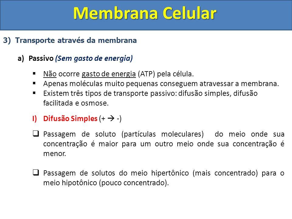 Membrana Celular 3) Transporte através da membrana a)Passivo (Sem gasto de energia) I)Difusão Simples (+ -) Para ocorrer difusão simples A membrana deve ser permeável ao soluto Deve haver diferença na concentração do soluto dentro e fora da célula.