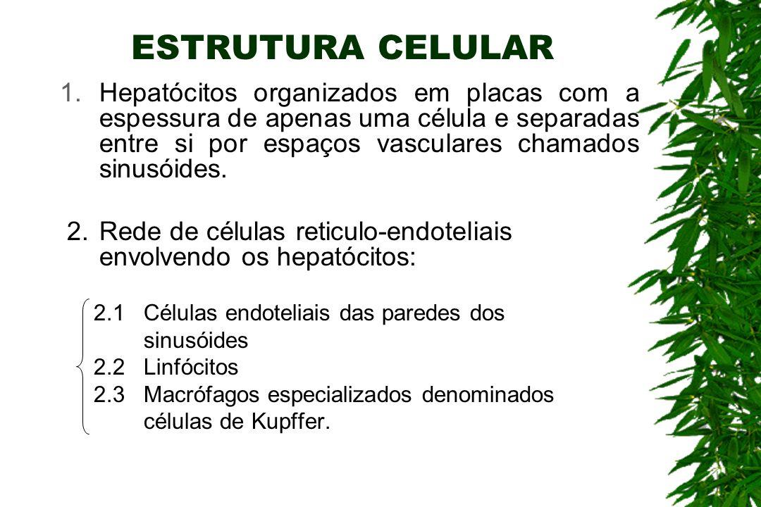 ESTRUTURA CELULAR 1.Hepatócitos organizados em placas com a espessura de apenas uma célula e separadas entre si por espaços vasculares chamados sinusóides.