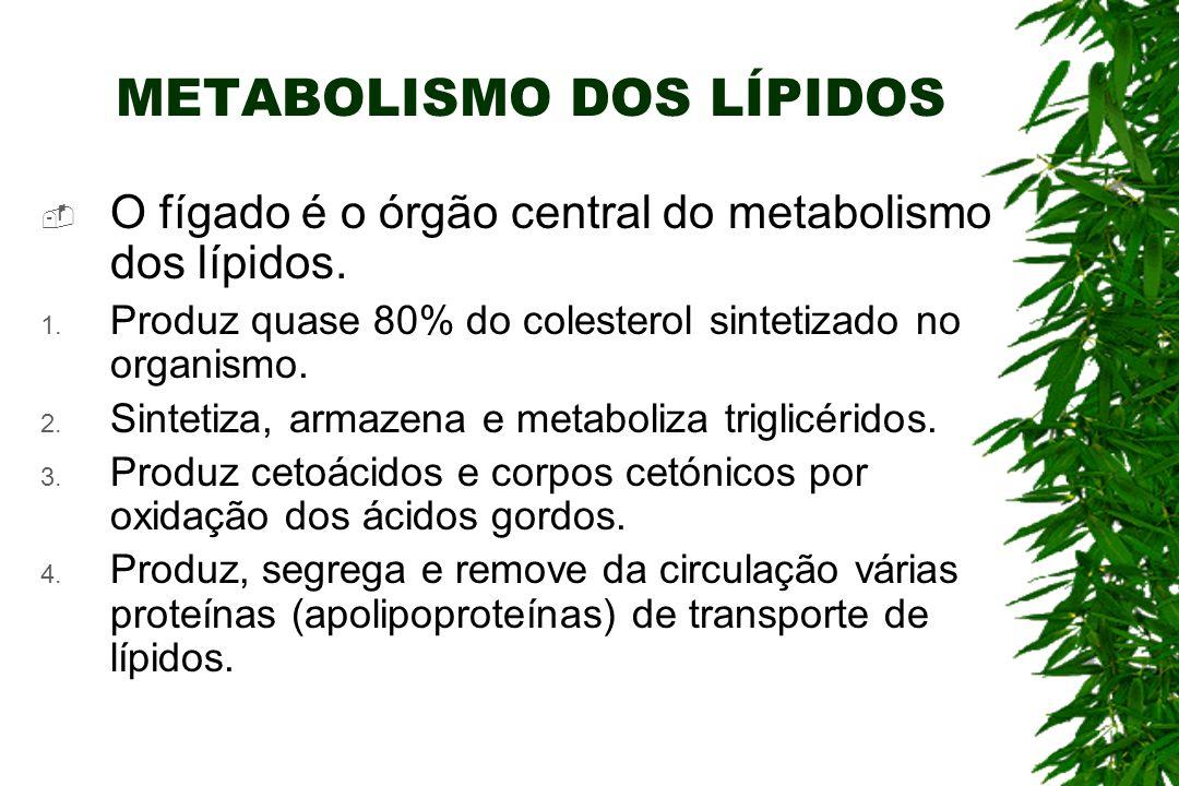 METABOLISMO DOS LÍPIDOS O fígado é o órgão central do metabolismo dos lípidos.