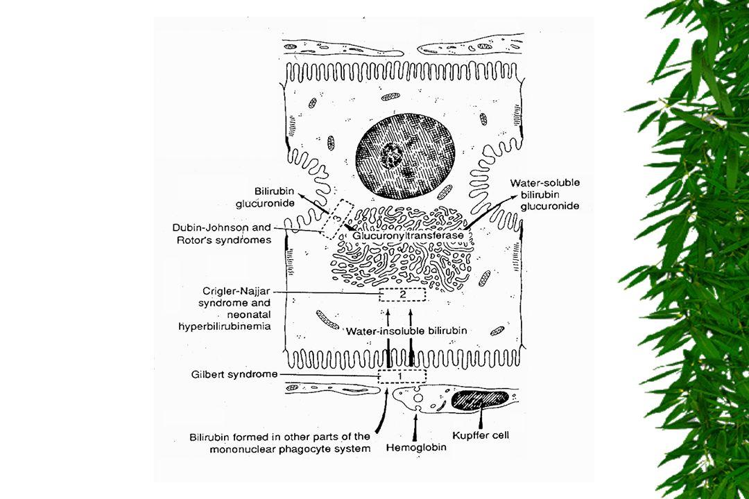 MECANISMOS DA DOENÇA Diminuição da produção/fluxo da bilis excreção de colesterol Hipercolesterolémia