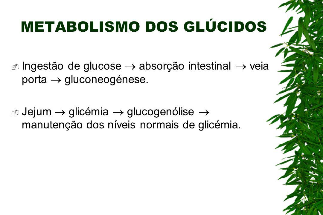 METABOLISMO DOS GLÚCIDOS Ingestão de glucose absorção intestinal veia porta gluconeogénese.