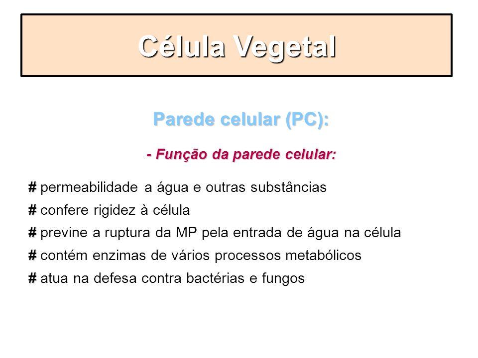 Parede celular (PC): - Função da parede celular: # # permeabilidade a água e outras substâncias # # confere rigidez à célula # # previne a ruptura da
