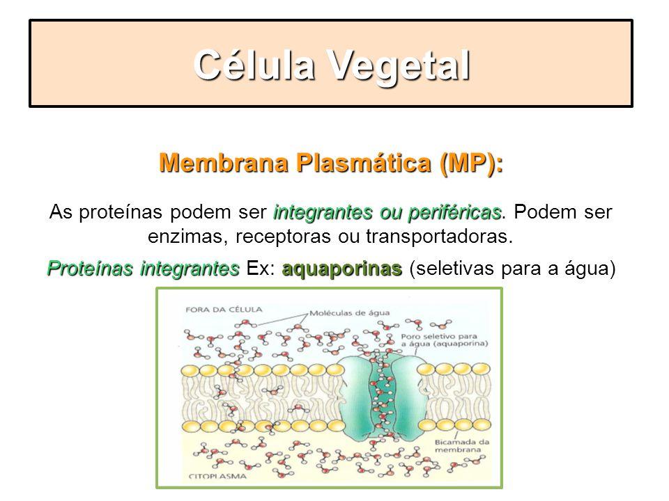 Membrana Plasmática (MP): integrantes ou periféricas As proteínas podem ser integrantes ou periféricas. Podem ser enzimas, receptoras ou transportador