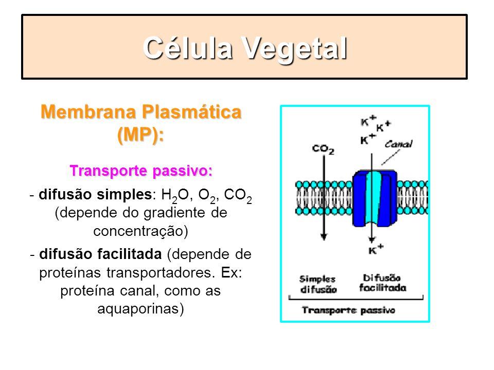 Membrana Plasmática (MP): Transporte passivo: - difusão simples: H 2 O, O 2, CO 2 (depende do gradiente de concentração) - difusão facilitada (depende