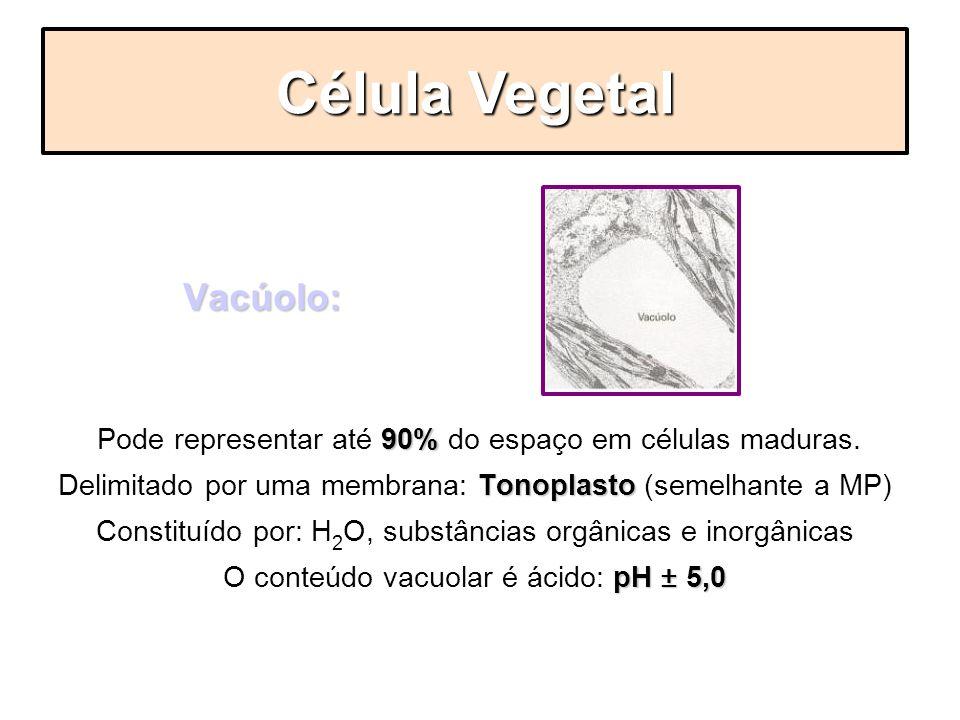 Vacúolo: Vacúolo: 90% Pode representar até 90% do espaço em células maduras. Tonoplasto Delimitado por uma membrana: Tonoplasto (semelhante a MP) Cons