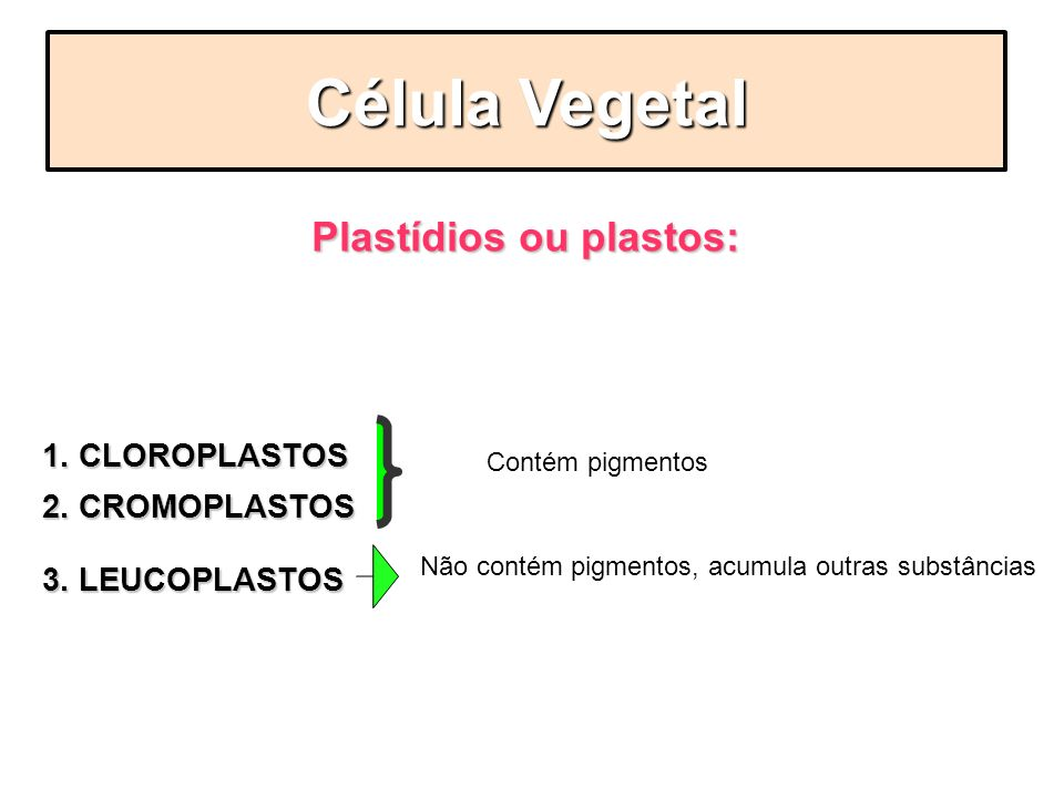 Plastídios ou plastos: São organelas que classificam-se em 3 grupos: 1. CLOROPLASTOS 2. CROMOPLASTOS 3. LEUCOPLASTOS Célula Vegetal Contém pigmentos N