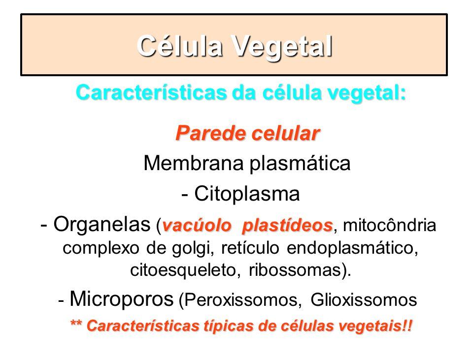 Características da célula vegetal: Parede celular - Parede celular - Membrana plasmática - Citoplasma vacúoloplastídeos - Organelas (vacúolo, plastíde