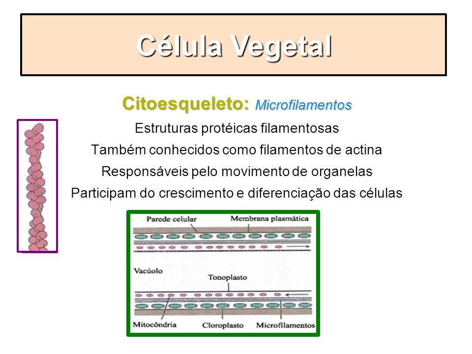 Citoesqueleto: Microfilamentos Estruturas protéicas filamentosas Também conhecidos como filamentos de actina Responsáveis pelo movimento de organelas