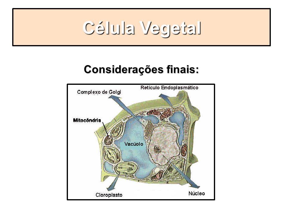 Considerações finais: Célula Vegetal