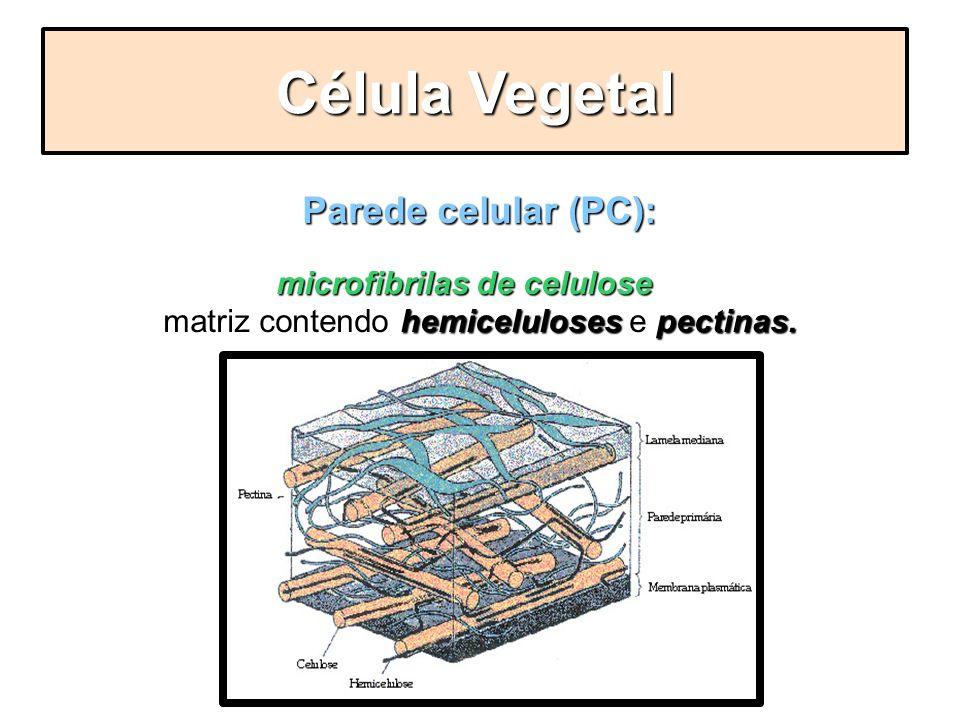 Parede celular (PC): microfibrilas de celulose hemicelulosespectinas. - Formada por microfibrilas de celulose imersas em uma matriz contendo hemicelul