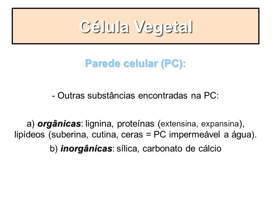 Parede celular (PC): - Outras substâncias encontradas na PC: orgânicas a) orgânicas: lignina, proteínas ( extensina, expansina ), lipídeos (suberina,