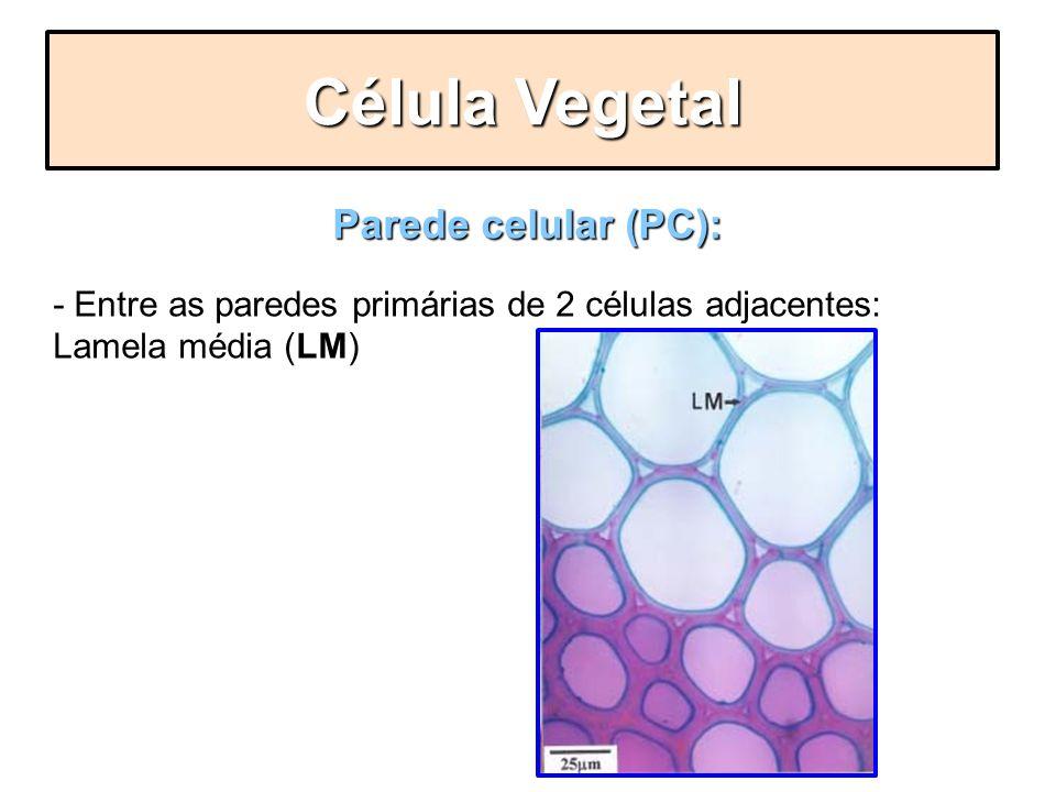 Parede celular (PC): LM - Entre as paredes primárias de 2 células adjacentes: Lamela média (LM) Célula Vegetal
