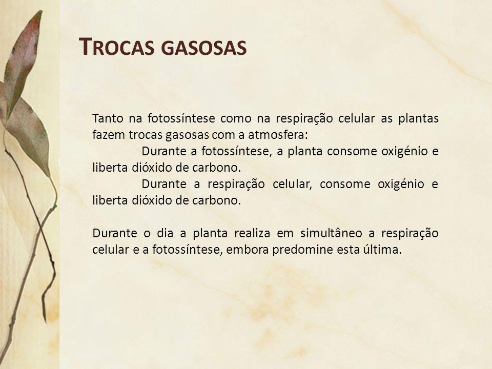 T ROCAS GASOSAS Tanto na fotossíntese como na respiração celular as plantas fazem trocas gasosas com a atmosfera: Durante a fotossíntese, a planta con