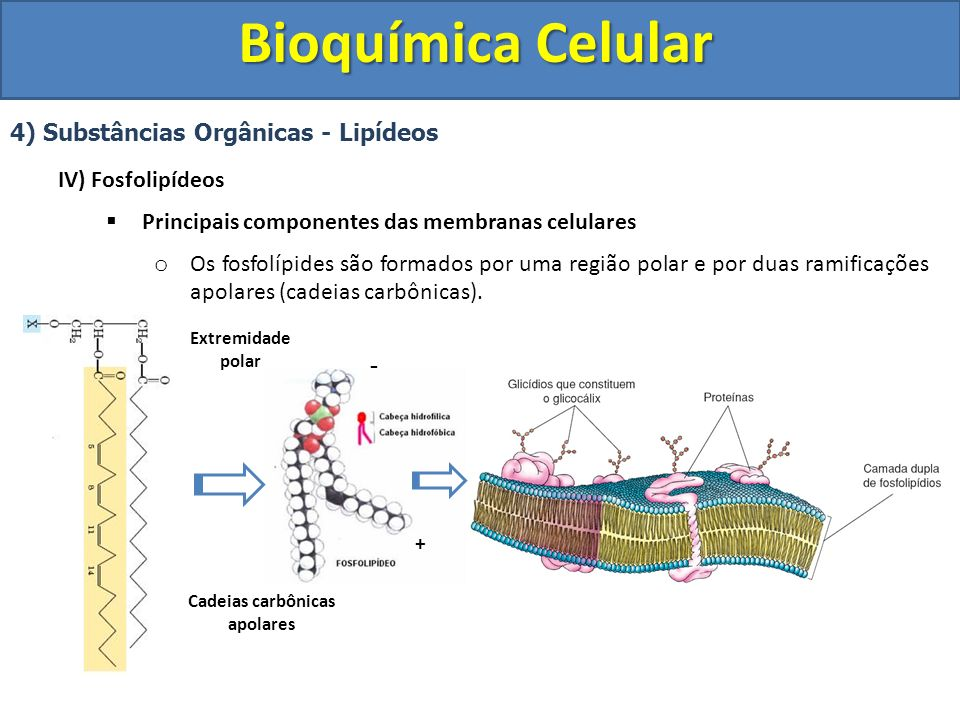 Bioquímica Celular 4) Substâncias Orgânicas - Lipídeos IV) Fosfolipídeos Principais componentes das membranas celulares o Os fosfolípides são formados