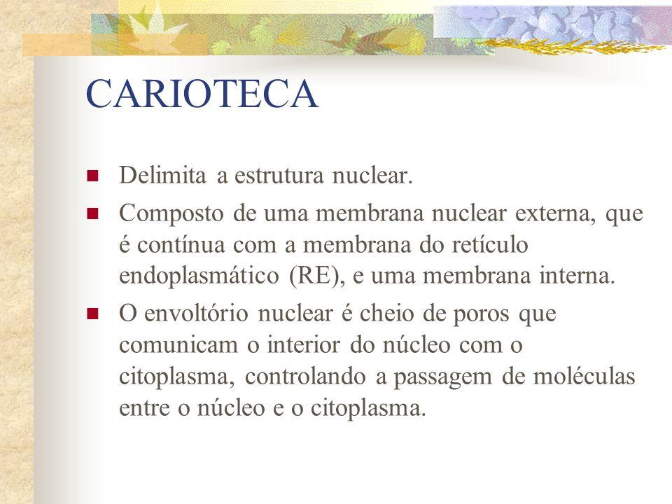 CARIOTECA Delimita a estrutura nuclear. Composto de uma membrana nuclear externa, que é contínua com a membrana do retículo endoplasmático (RE), e uma