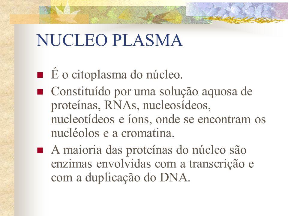 NUCLEO PLASMA É o citoplasma do núcleo. Constituído por uma solução aquosa de proteínas, RNAs, nucleosídeos, nucleotídeos e íons, onde se encontram os