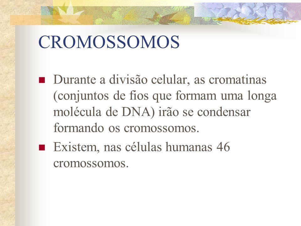 CROMOSSOMOS Durante a divisão celular, as cromatinas (conjuntos de fios que formam uma longa molécula de DNA) irão se condensar formando os cromossomo