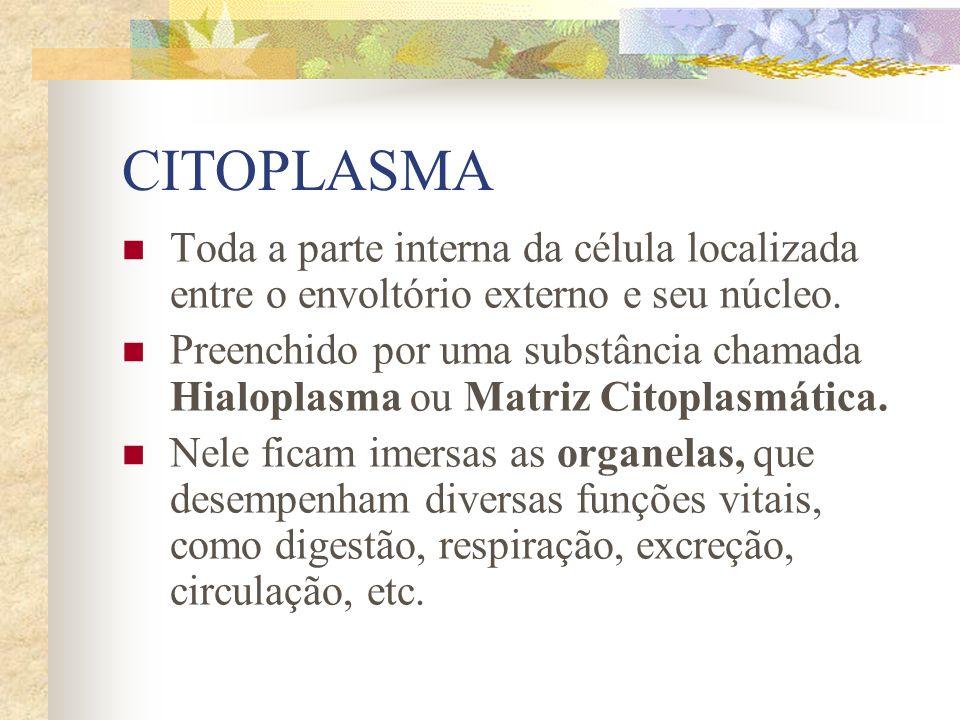 CITOPLASMA Toda a parte interna da célula localizada entre o envoltório externo e seu núcleo. Preenchido por uma substância chamada Hialoplasma ou Mat