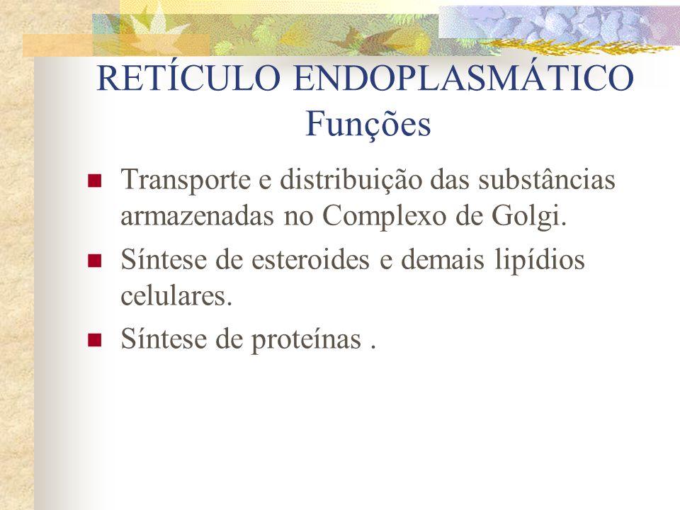 RETÍCULO ENDOPLASMÁTICO Tipos liso ou agranular – não possui ribossomos aderidos às suas superfícies.