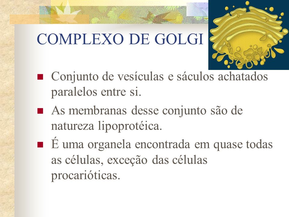 COMPLEXO DE GOLGI Conjunto de vesículas e sáculos achatados paralelos entre si. As membranas desse conjunto são de natureza lipoprotéica. É uma organe