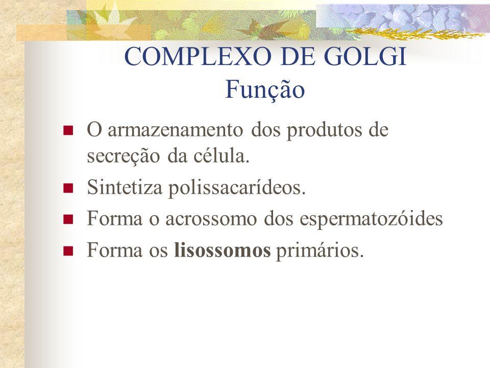 COMPLEXO DE GOLGI Função O armazenamento dos produtos de secreção da célula. Sintetiza polissacarídeos. Forma o acrossomo dos espermatozóides Forma os