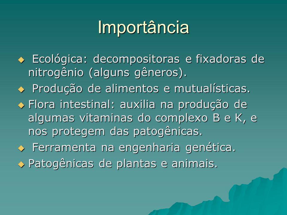Importância Ecológica: decompositoras e fixadoras de nitrogênio (alguns gêneros). Ecológica: decompositoras e fixadoras de nitrogênio (alguns gêneros)