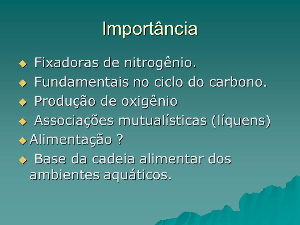 Importância Fixadoras de nitrogênio. Fixadoras de nitrogênio. Fundamentais no ciclo do carbono. Fundamentais no ciclo do carbono. Produção de oxigênio