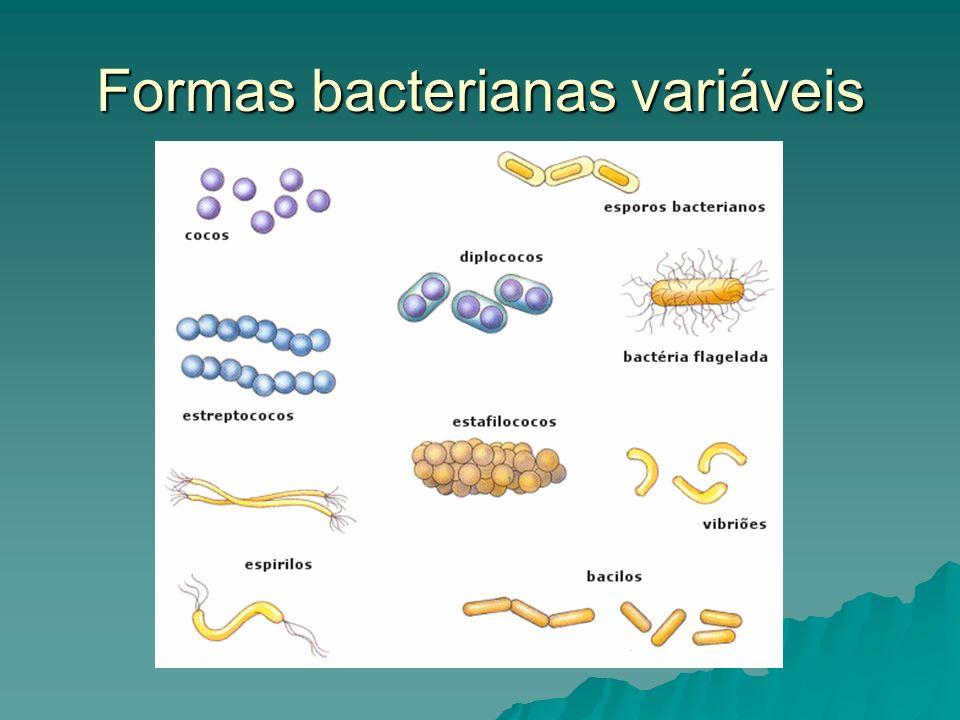 Formas bacterianas variáveis
