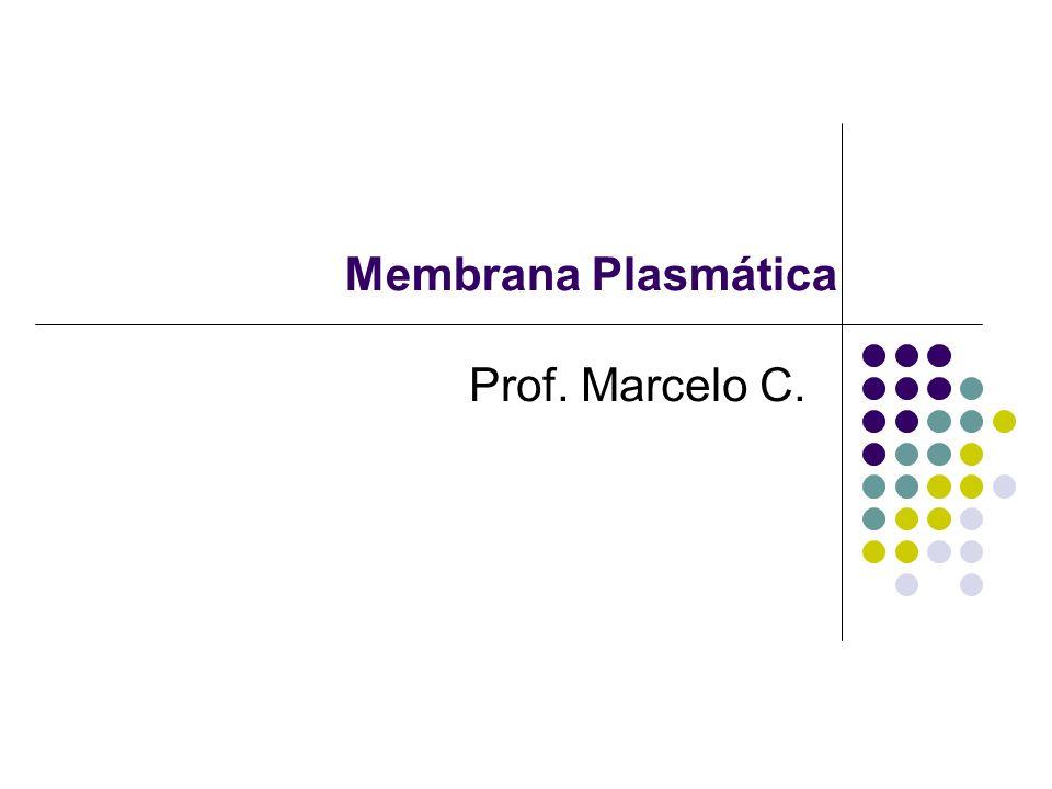 Especializações da membrana ou Diferenciações de Membrana Microvilosidades Plasmodesmos Desmossomos Interdigitações Cílios e flagelos