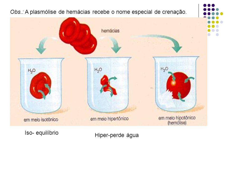 Caso, seja retirada desta solução e mergulhada numa solução HIPOTÔNICA, ocorrerá o acúmulo de água em seu interior provocando o rompimento da membrana