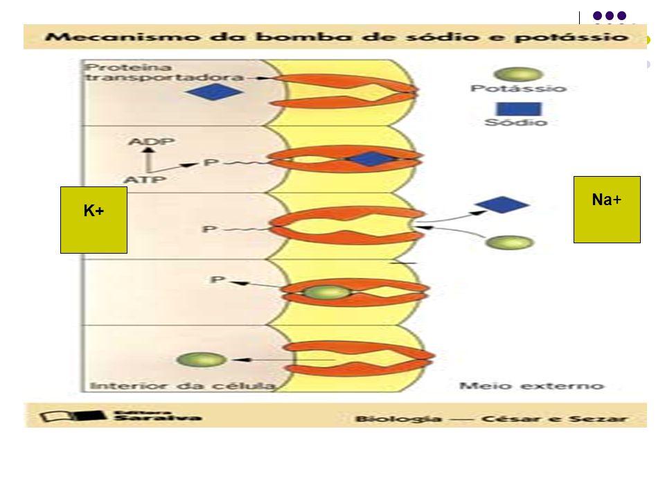 ATP: energia para a célula realizar trabalho A energia de que a célula dispõe é sintetizada por ela mesma, armazenada na forma de uma molécula chamada