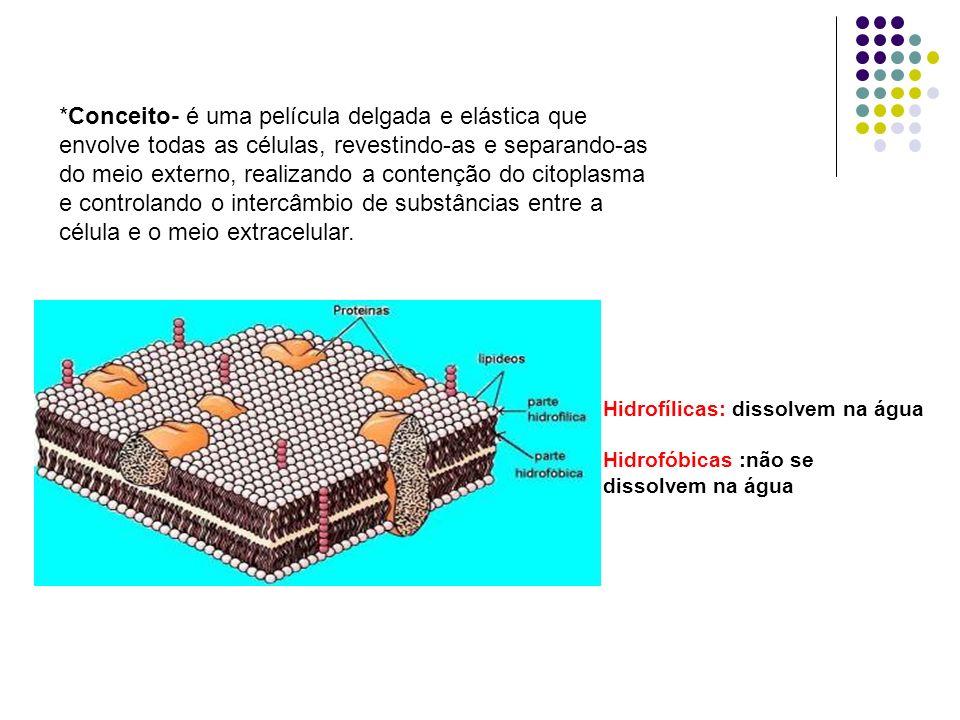 3- INTERDIGITAÇÕES São saliências e reentrâncias da membrana de 2 células vizinha que se encaixam entre si, aumentando a aderência entre elas.