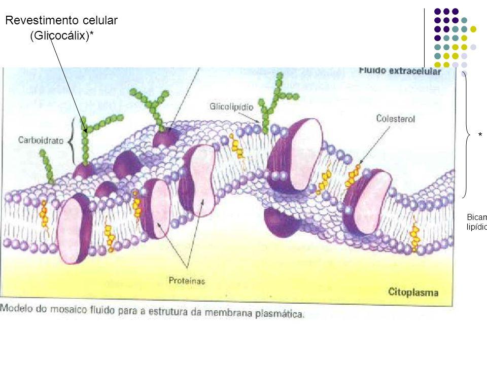 *Conceito- é uma película delgada e elástica que envolve todas as células, revestindo-as e separando-as do meio externo, realizando a contenção do cit