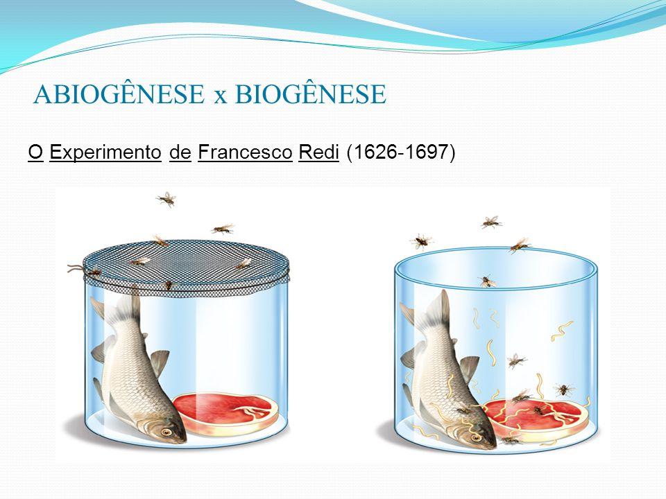 ABIOGÊNESE x BIOGÊNESE O Experimento de Francesco Redi (1626-1697)