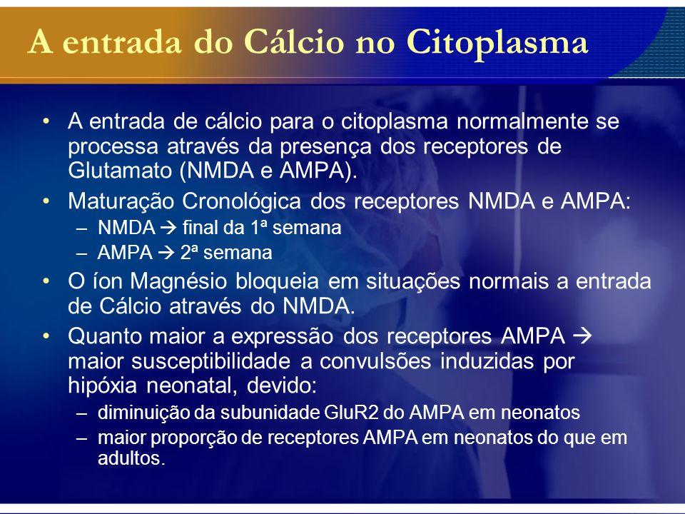 A entrada do Cálcio no Citoplasma Efeitos da Hipóxia ou Convulsões Em situações de hipóxia/convulsões: –Perde-se o mecanismo regulador do Mg nos receptores NMDA.