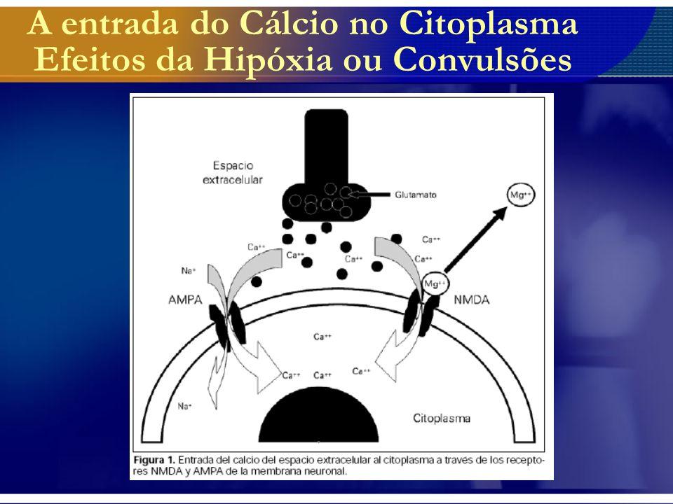 Efeitos do Aumento Citoplasmático do Cálcio A elevação da concentração de Cálcio citoplasmático exerce vários efeitos danosos no citoplasma entre eles: –Ativação de vias de formação de radicais livres; –Alteração na fosforilação oxidativa mitocondrial; –Ativação dos receptores excitatórios NMDA.