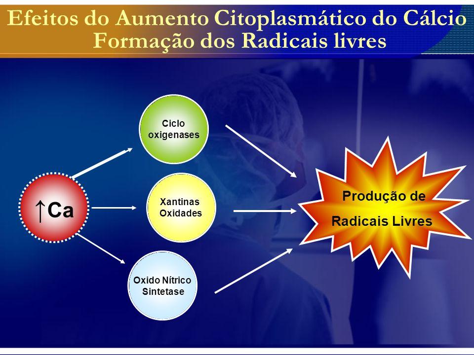 Oxidação mitocondrial sem produção de radicais livres.