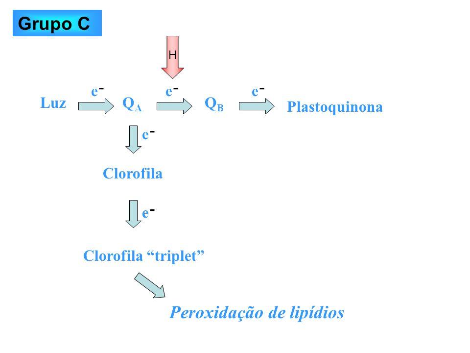 LuzQAQA QBQB Plastoquinona Clorofila Clorofila triplet Peroxidação de lipídios H e e ee e - - --- Grupo C