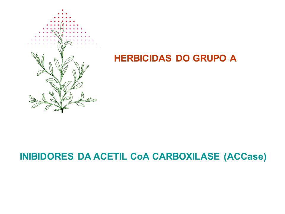 HERBICIDAS DO GRUPO A INIBIDORES DA ACETIL CoA CARBOXILASE (ACCase)
