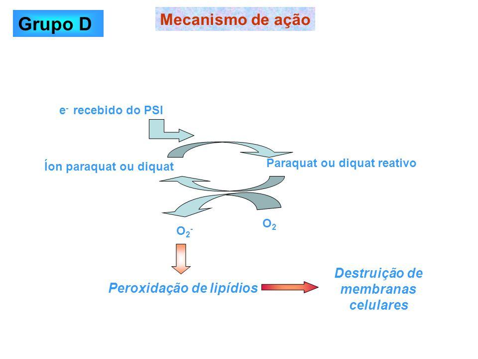 e - recebido do PSI Íon paraquat ou diquat Paraquat ou diquat reativo O2O2 O2-O2- Peroxidação de lipídios Destruição de membranas celulares Mecanismo