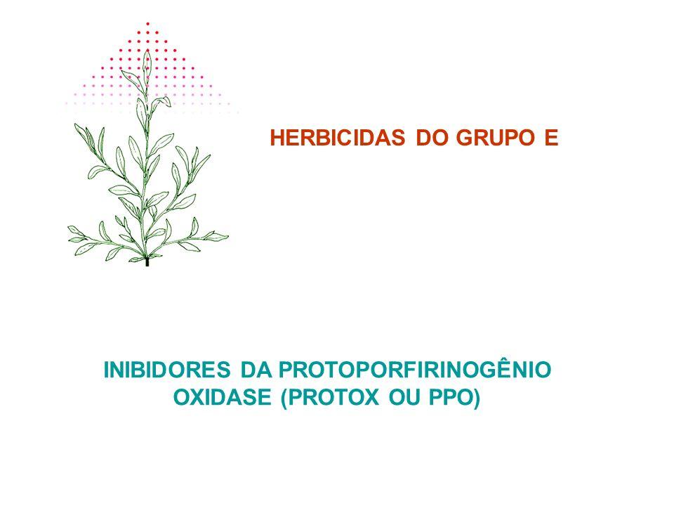 HERBICIDAS DO GRUPO E INIBIDORES DA PROTOPORFIRINOGÊNIO OXIDASE (PROTOX OU PPO)