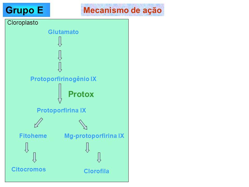 Mecanismo de ação Glutamato Protoporfirinogênio IX Protoporfirina IX Protox FitohemeMg-protoporfirina IX Citocromos Clorofila Cloroplasto Grupo E