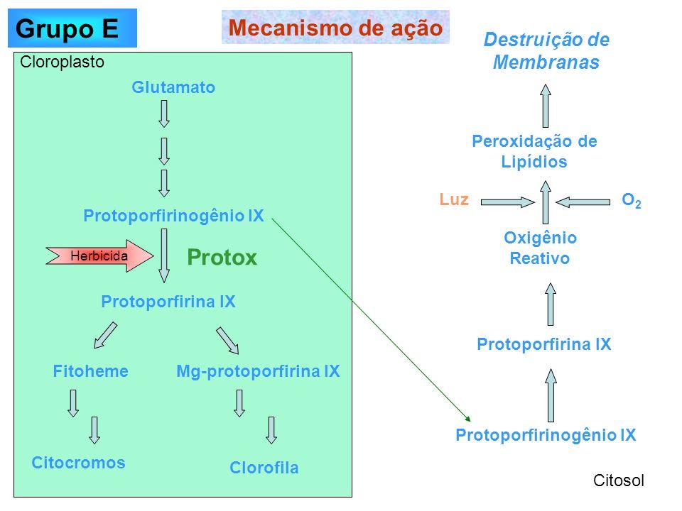 Mecanismo de ação Protoporfirinogênio IX Protoporfirina IX Oxigênio Reativo Peroxidação de Lipídios Destruição de Membranas Glutamato Protoporfirinogê